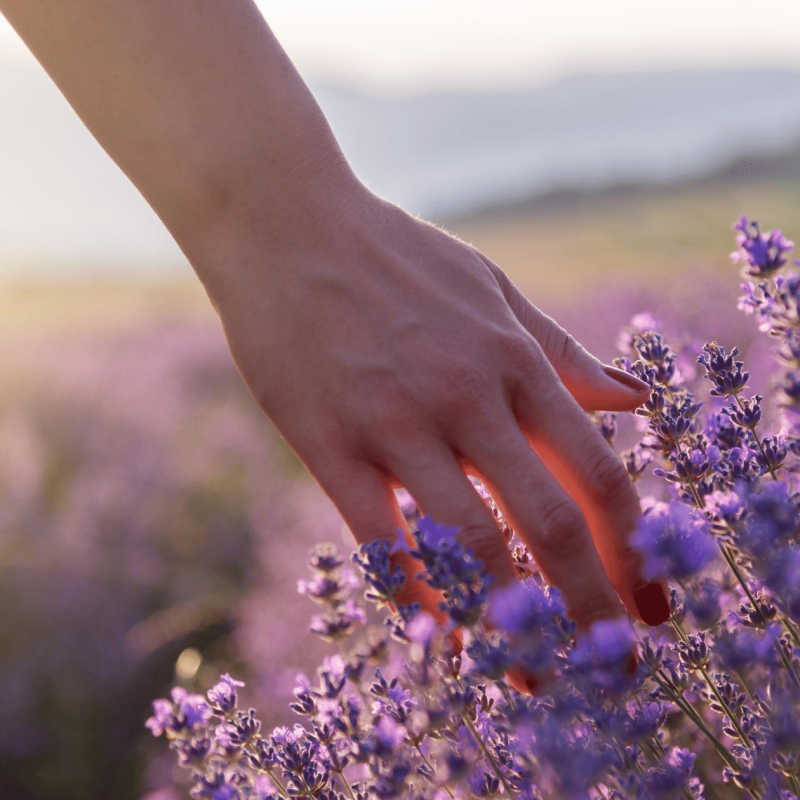 Finding Your Calm Space: Calming Essential Oils